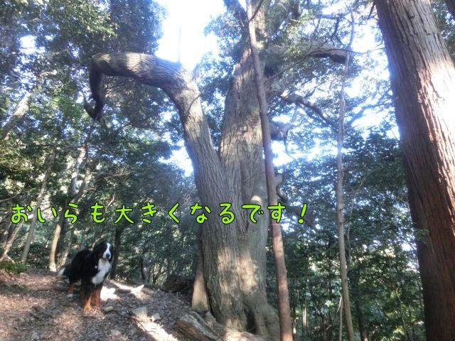 CIMG9070_201601051248516ac.jpg