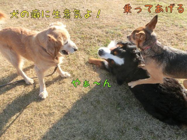 CIMG9215_2016010920200480c.jpg