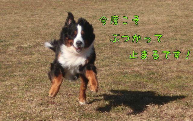 CIMG9254_2016011015435376f.jpg