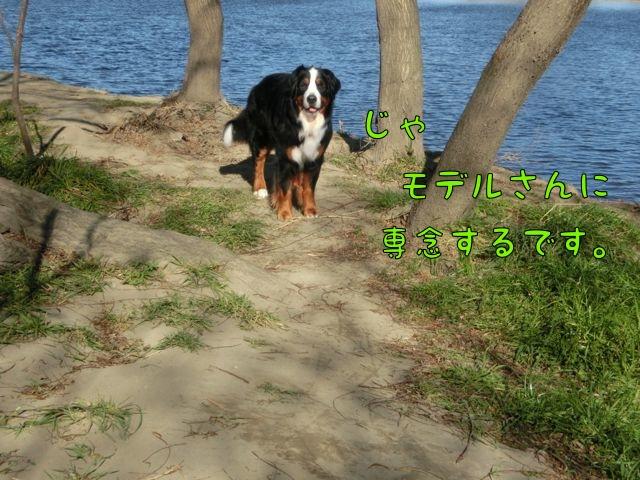 CIMG9261_20160110154356be7.jpg