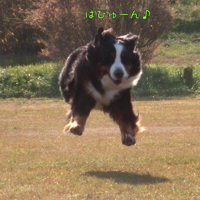CIMG9358_20160115130419b9d.jpg