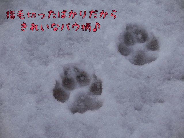 CIMG9585.jpg