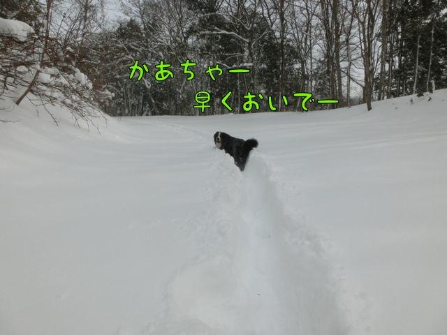 CIMG9648.jpg