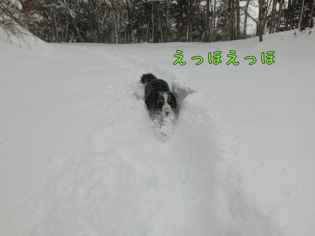 CIMG9660.jpg