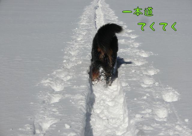 CIMG9964.jpg