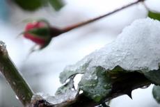 雪の日04