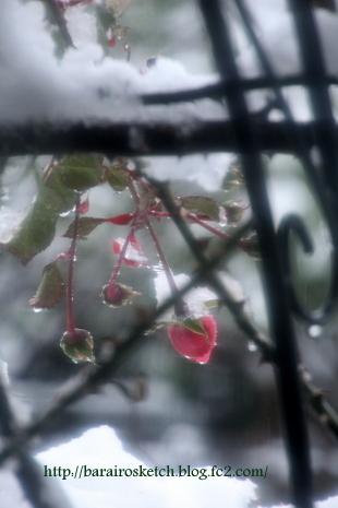 雪の日05