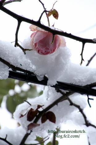 雪の日06