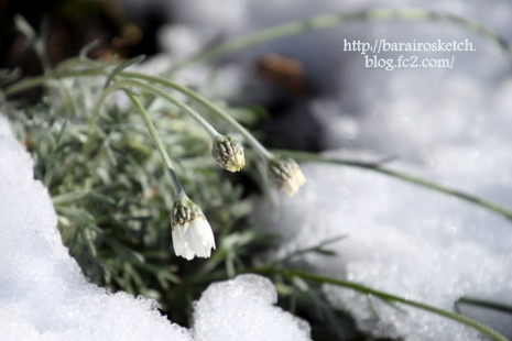 雪解け01