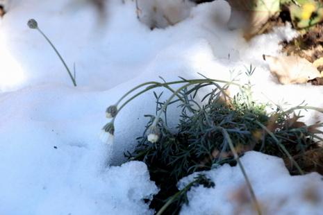雪解け02