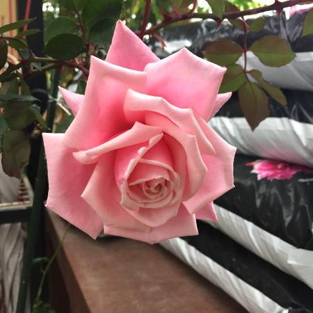 BlossomTime.jpg