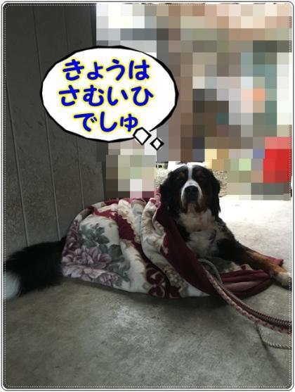 in 毛布