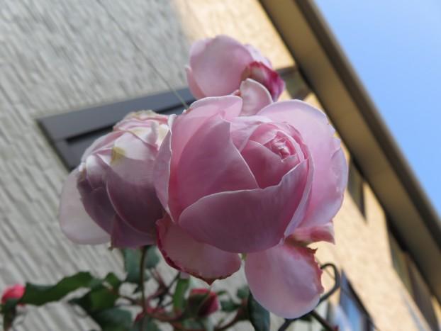 びぃなむ1218-03
