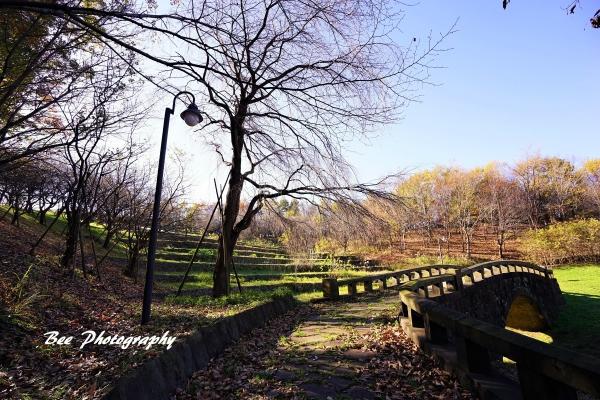 bee-栃谷戸公園5602