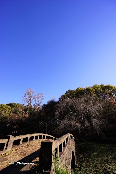 bee-栃谷戸公園5610
