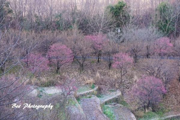 bee-栃谷戸公園6829