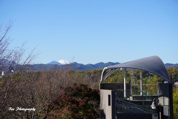 bee-栃谷戸公園5624