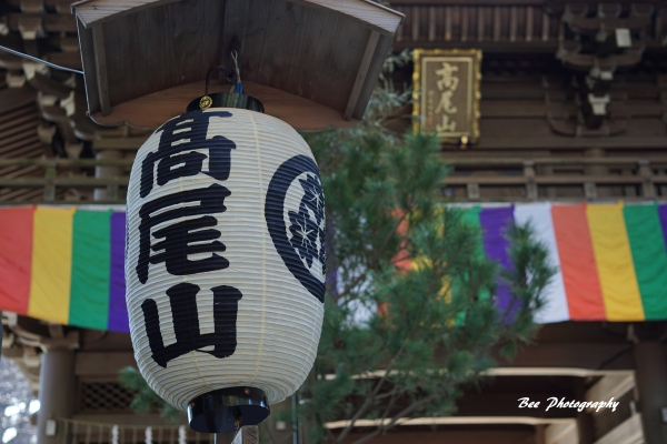 bee-高尾山7217