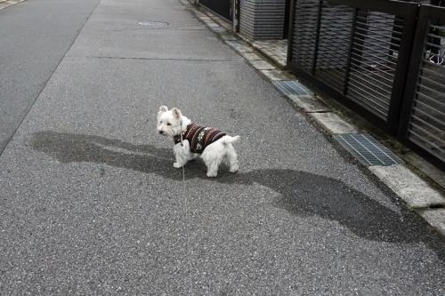chinoatogakienaindayone1.jpg