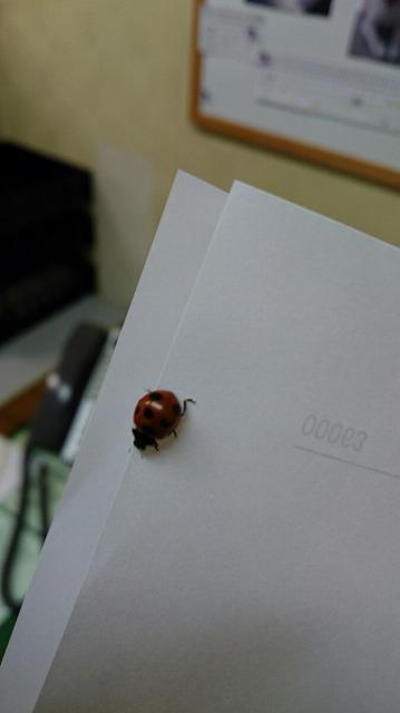 DSC_0123てんとう虫