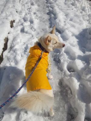 雪の散歩 (4)