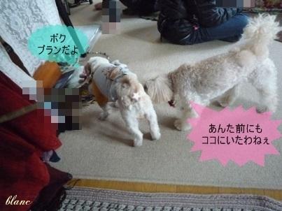 ブランとモコ(1)