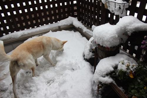 IMG_2783積雪