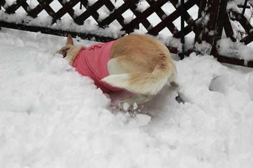 IMG_2791積雪