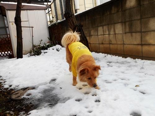 005積雪