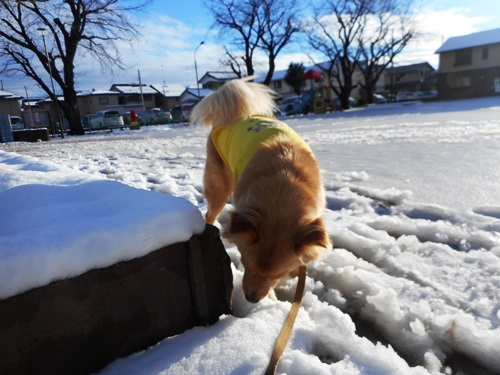 007積雪