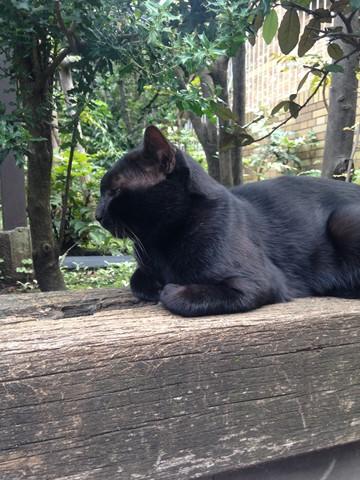 黒猫様 (コピー)