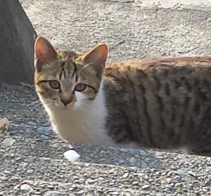 子猫002