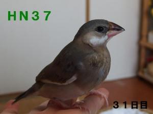 HN37~ポーズ!