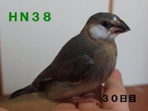 HN38~ポーズ!