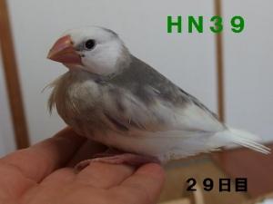HN39~ポーズ!