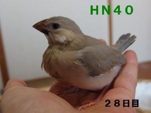 HN40~ポーズ!