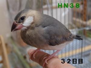 HN38~今やねだりっぷりは1番!