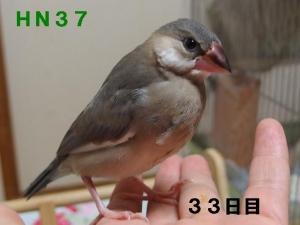 HN37~よく動く元気印っこ!声も相変わらず大きい!