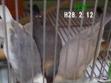 小さい餌入れに3羽、頭突っこんでみる!