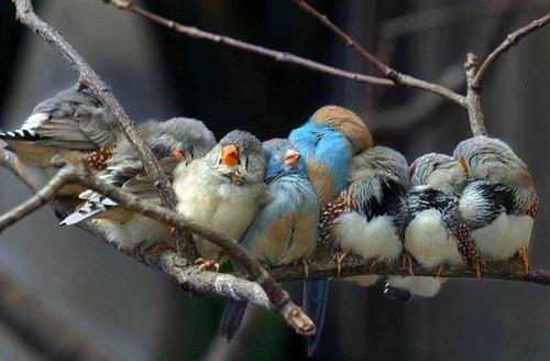 厳しい冬を越して春を待つ小鳥たち