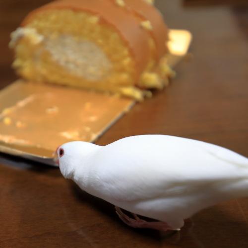 ロールケーキ (5)
