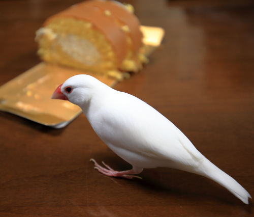 ロールケーキ (4)
