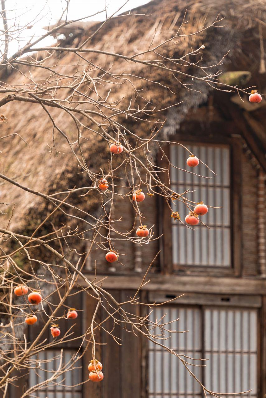 2015.12.24白川郷3