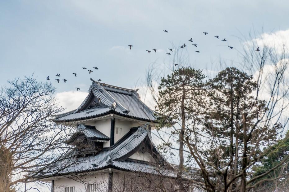 2016.01.10金沢市の消防出初式_一斉放水6