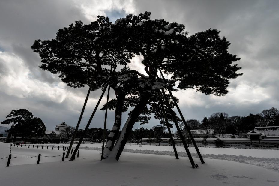 2016.01.25金沢城公園16