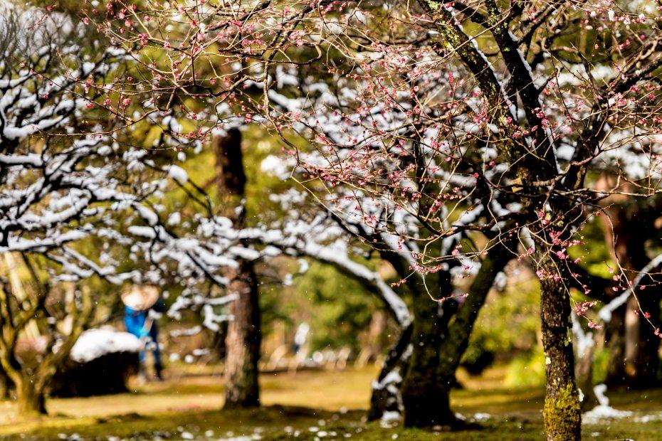 2016.02.07兼六園の雪景色7