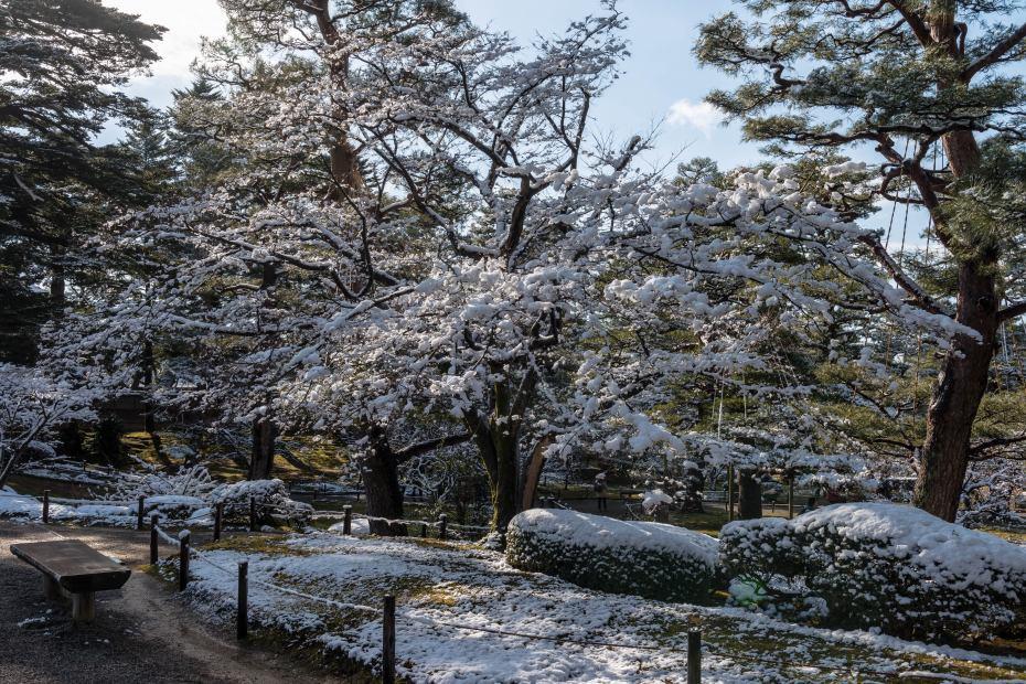 2016.02.07兼六園の雪景色6