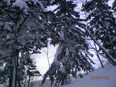 縮小2静かな森