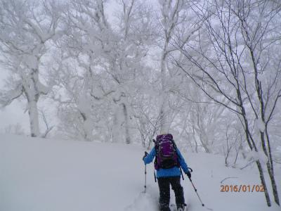 縮小2木の雪が