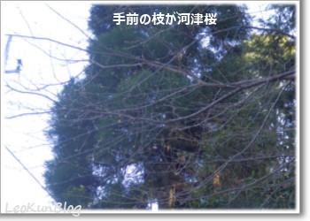 201601132.jpg